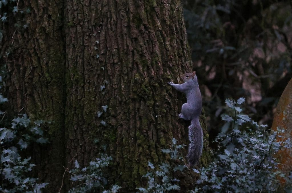Squirrel photographed in a carlisle park