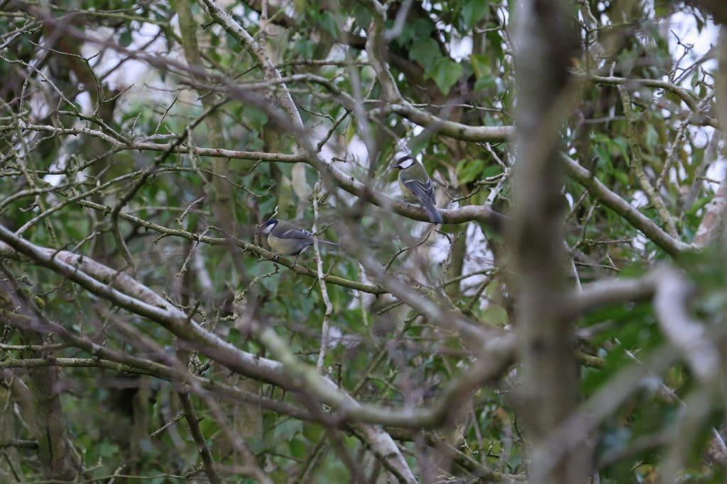 Birds next to the River Eden, Carlisle