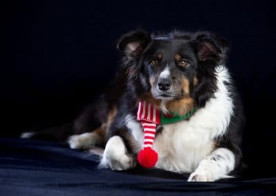 Dog Photography Cumbria